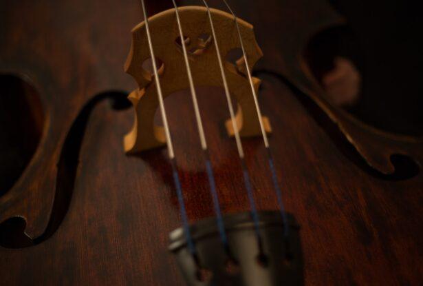 弦楽器の楽器法②:ヴィオラの構造、音域、特徴を理解しよう!