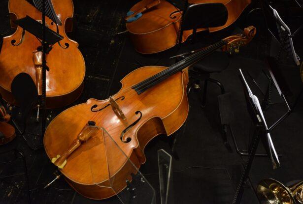 弦楽器の楽器法④:コントラバスの構造、音域、特徴を理解しよう!